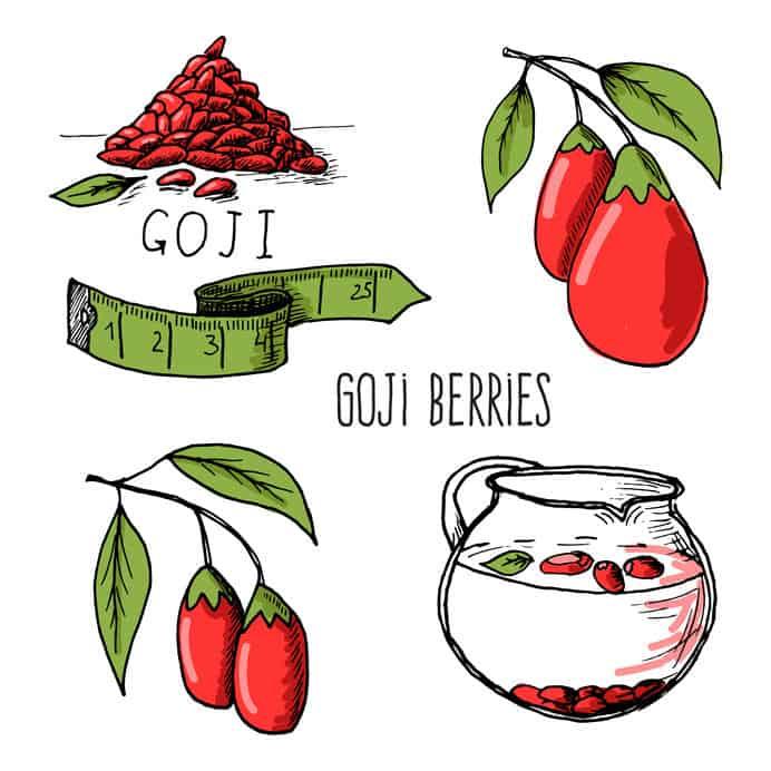 Ilustração sobre goji berry.