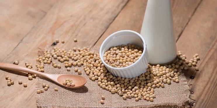 grãos de soja e leite de soja