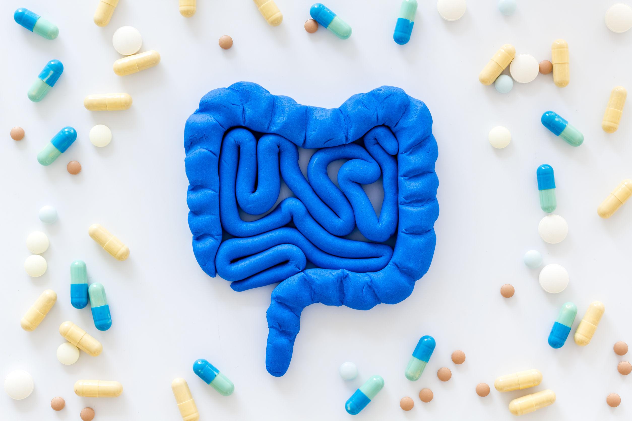 maquete do sistema digestivo