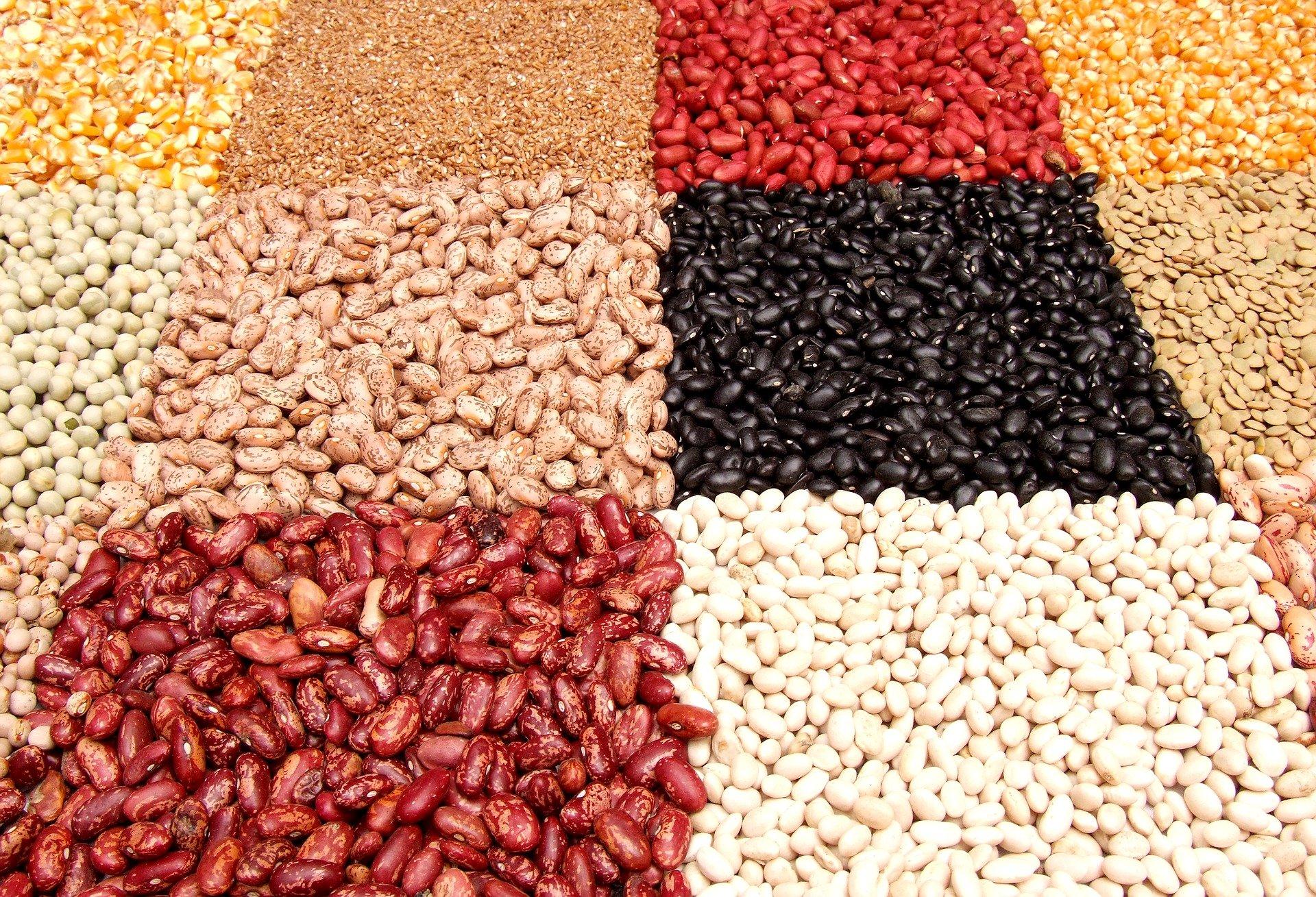 Imagem mostra vários vegetais como feijões e lentilhas.