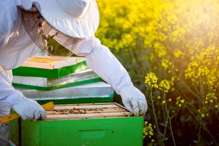 Un apicultor trabajando