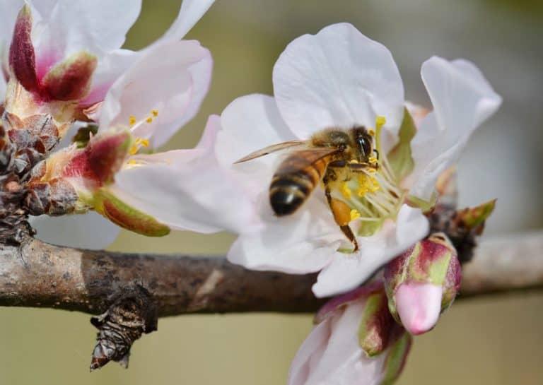 Una abeja en una flor